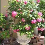 Wyjątkowo piękna donica na ogorowe kwiaty